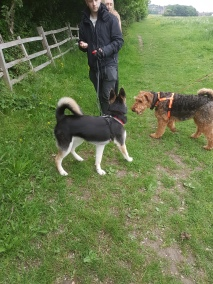 Archie and Goku meeting calmly on a Guided Walk